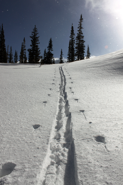 Breaking trail near the top of White Pine