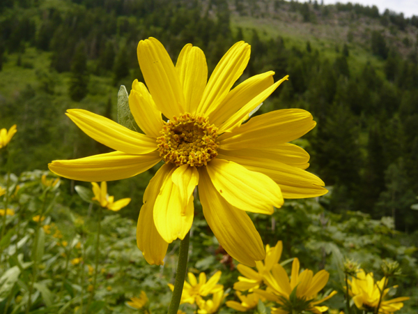 Celebrate Summer At The 2010 Wasatch Wildflower Festival