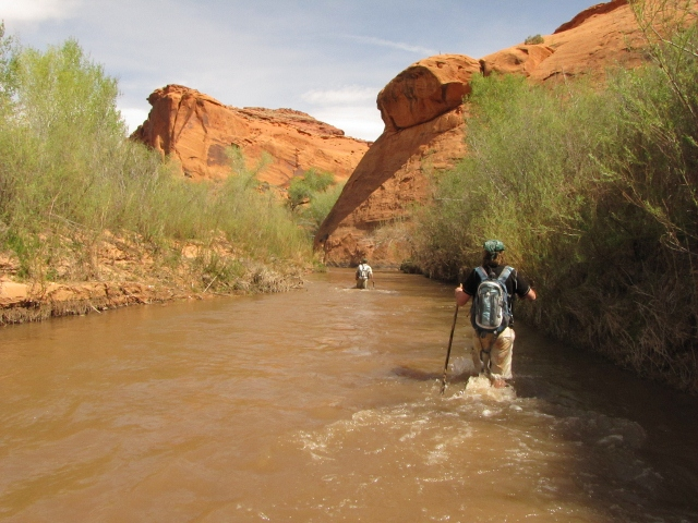 Expect plenty of wading in the Escalante River. Photo: Skip Whitman