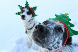 Happy Holidays from the UtahOutside.com dogs!