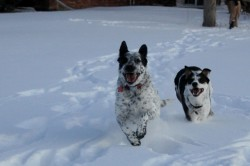 The snow day went to the dogs this holiday season.