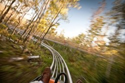 Snowbird's mountain coaster won't get you faceshots, but it will make your peripheral vision blurry. (Courtesy Image)
