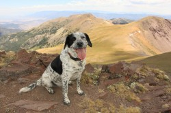 Lucy poses at the summit of Delano Peak, the highest point in Beaver and Piute counties. (Photo: Jared Hargrave - UtahOutside.com)