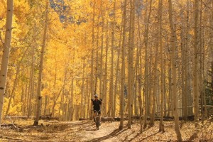 A mountain biker rides through the aspen grove section of The Whole Enchilada in Moab, Utah. (Photo: Jared Hargrave - UtahOutside.com)