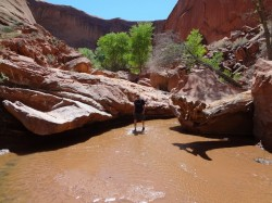 Hiker Skip Whitman beats the heat by walking through the stream in Coyote Gulch (Ryan Malavolta)