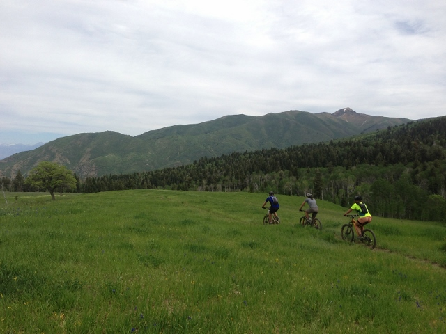 The group mountain bikes through fields of green at Payson Lakes. (Photo: Rusty Miholland)