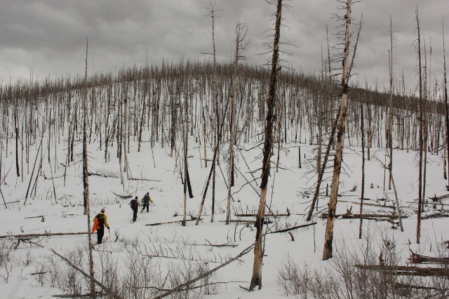 A spooky, burnt forest lies right out the front door of the Ridge Yurt. (Photo: Jared Hargrave - UtahOutside.com)