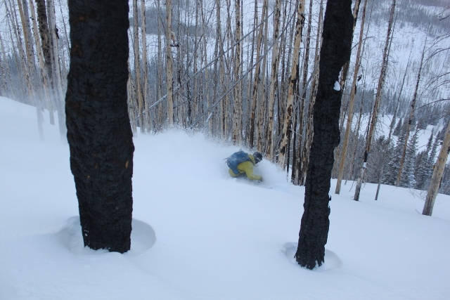 Another burnt forest above the Boundary Creek Yurt provides another opportunity to ski perfectly spaced trees in protected powder. (Skier: Mike Debernardo. Photo: Jared Hargrave - UtahOutside.com)