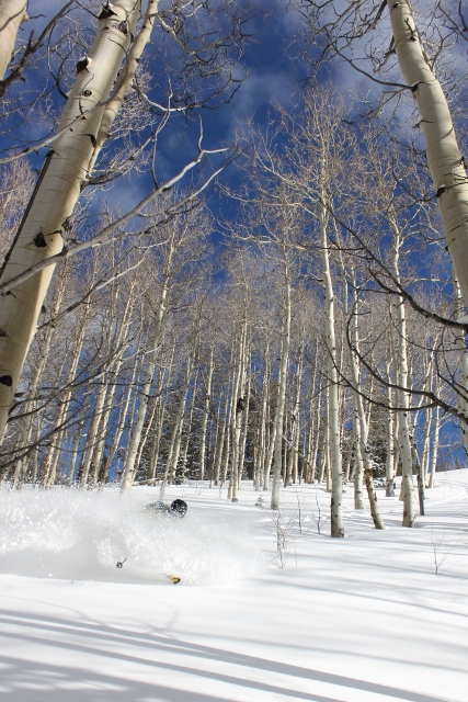 We discovered face shots in the aspen trees near the Boundary Creek Yurt - one of many runs taken as part of the yurt life. (Photo: Jared Hargrave - UtahOutside.com)