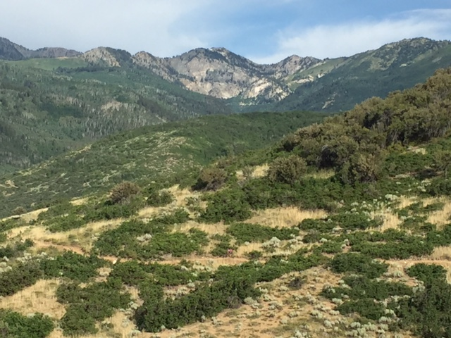 The Wasatch Back has become a whole lot more mountain bike friendly with the addition of the WOW Trail. (Photo: Jared Hargrave - UtahOutside.com)